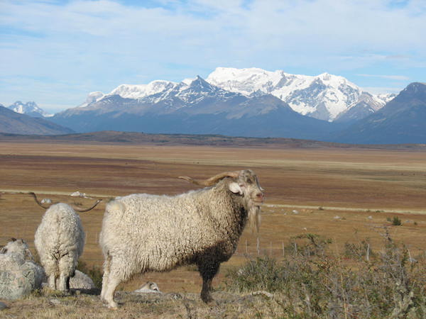 PatagonianSteppes-1