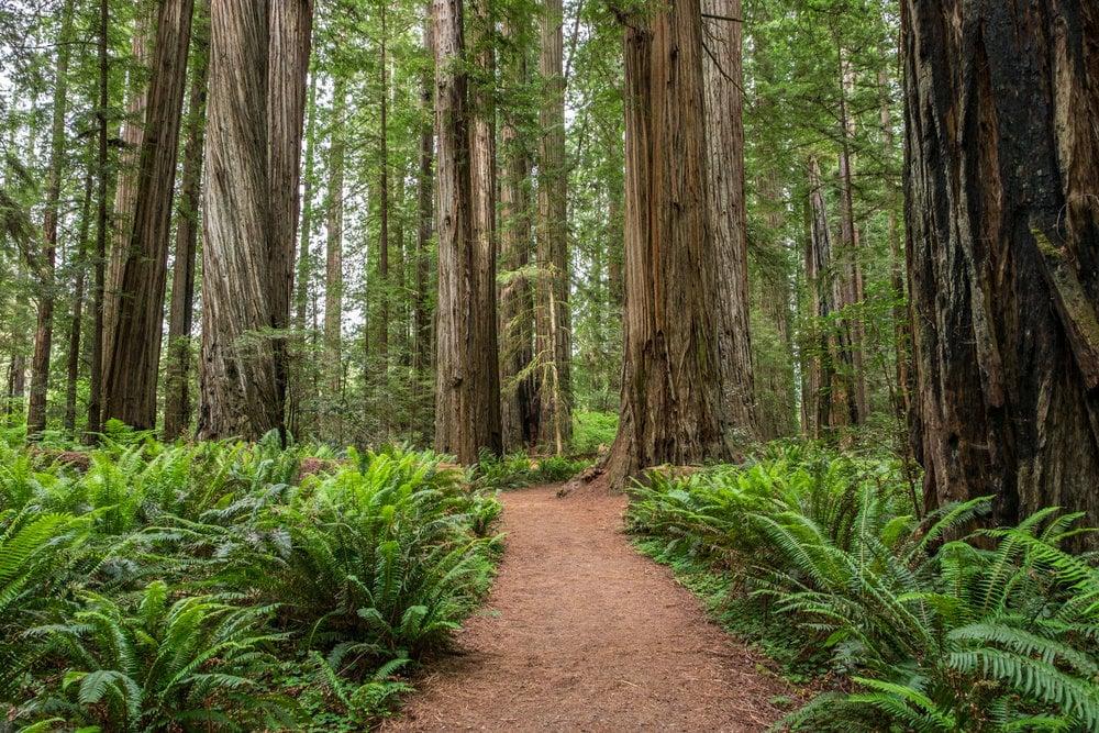 Redwoods+National+Park+-+009-2